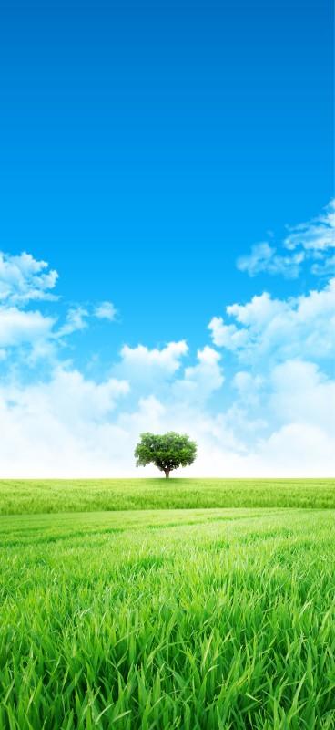 media/image/AdobeStock_76448431_Baum-auf-einer-gr-nen-Wiese_Umwelt.jpg