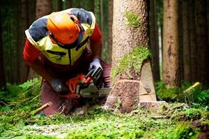Forstarbeiter-beim-Baumfallen